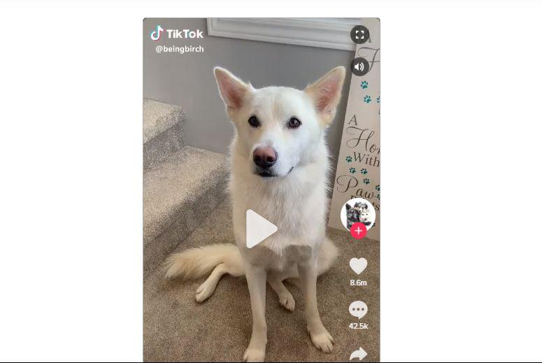 tiktok screengrab - Is TikTok Reading and Copying Your User Data?